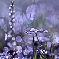 : lucid dreams : by hellfirediva