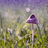 :: fairie wonderland :: by hellfirediva