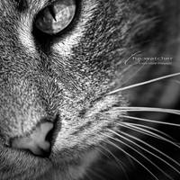 :: the watcher :: by hellfirediva
