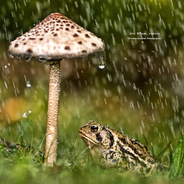 : in the rain :