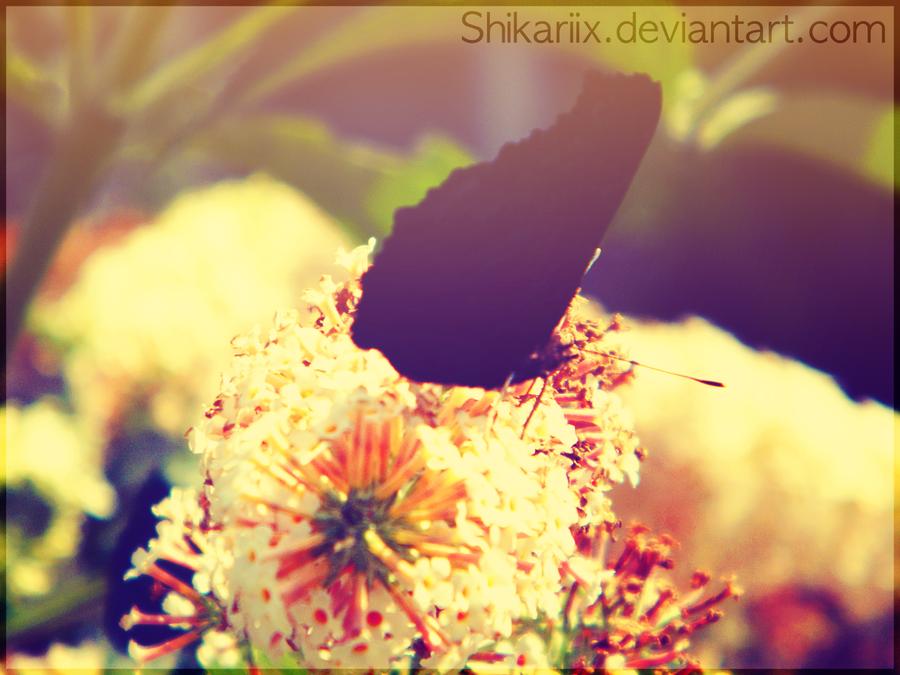 Black on White by Shikariix