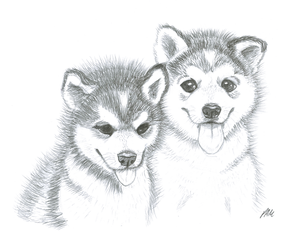 Husky puppies! by Enigmatic-Wolf