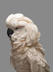 Cockatoo by immetapod0