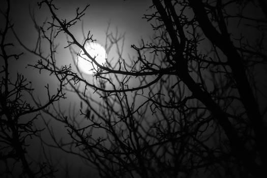 What Lurks Under Moonlight