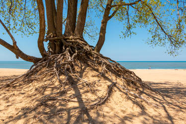 Warren Dunes State Park - Rooted by SunsetSailor