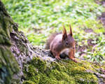 Squirrel by LacrimaNigra