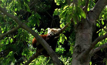 panda by aenntchen