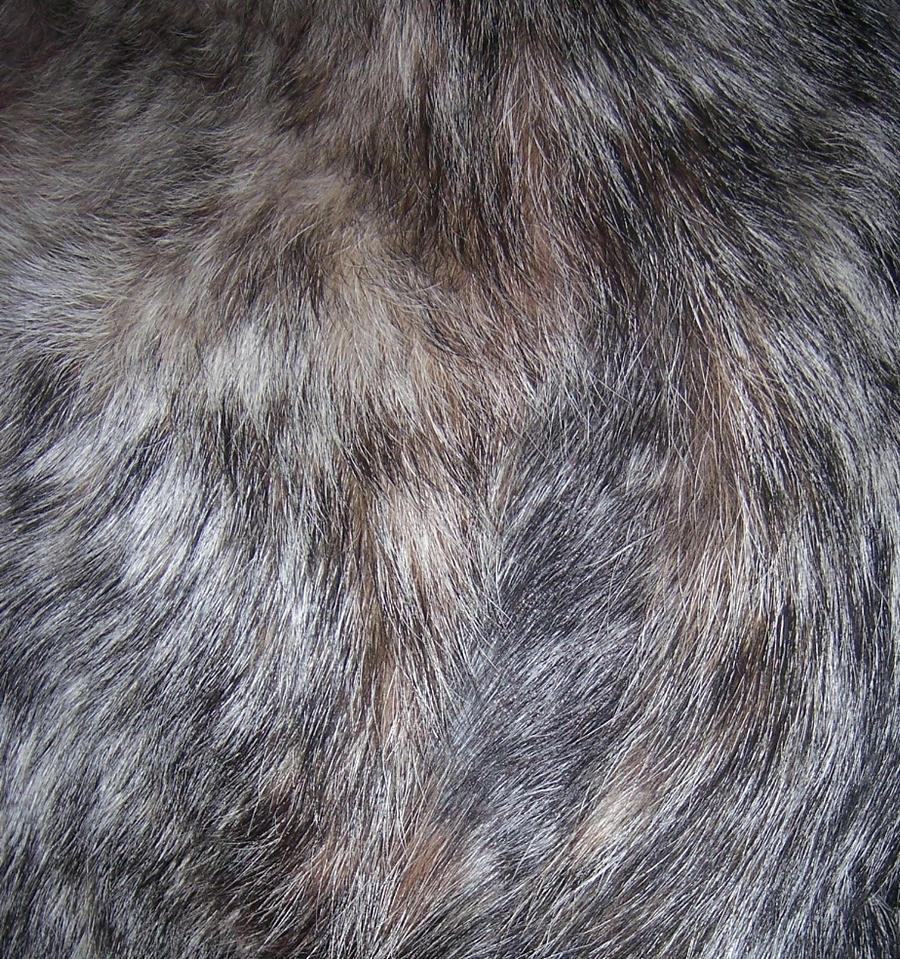 Dog Fur 001