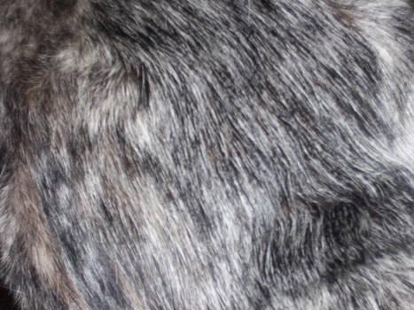 Dog Fur 003