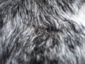 Dog Fur 004