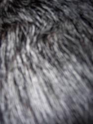 Dog Fur 005