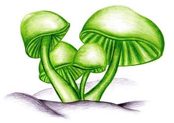 Mushrooms by TayaDee