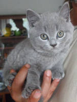 Kittens - Simply cute by TayaDee