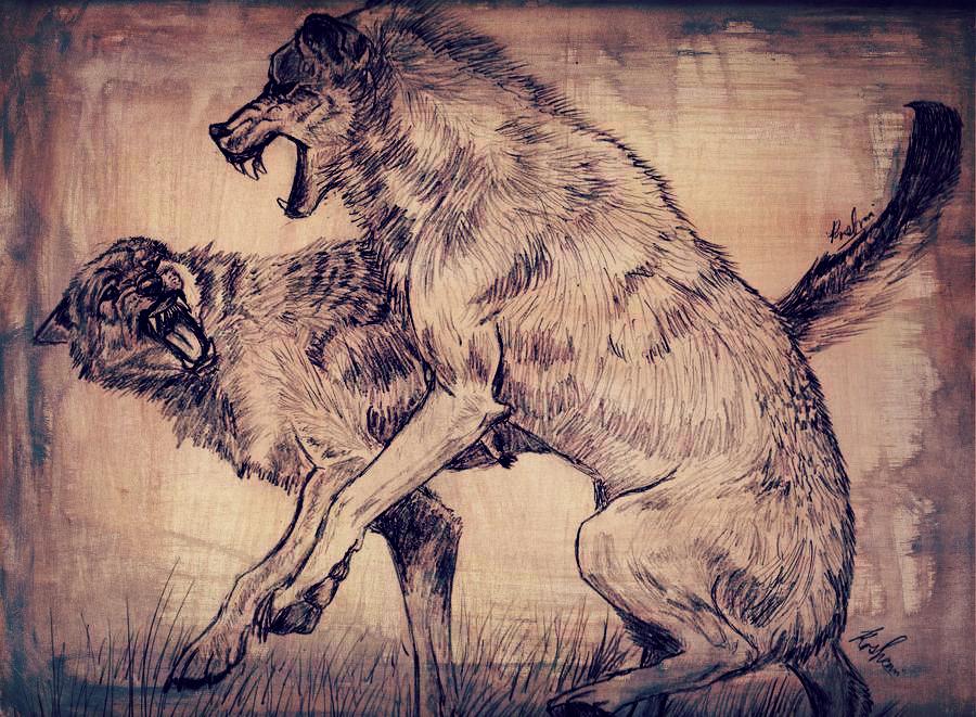 Wolf Fight by Foalen o...
