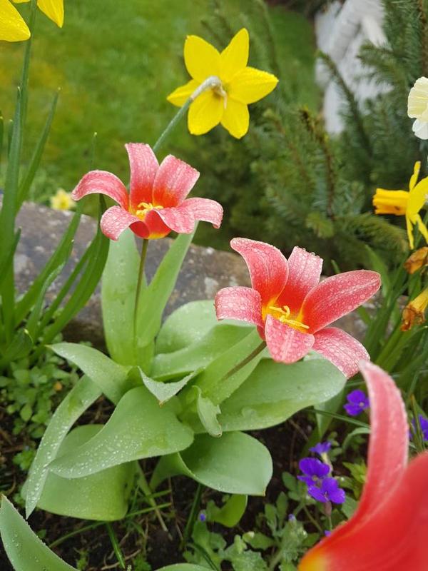 Flowers by KidoCat
