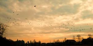 birds on the sky