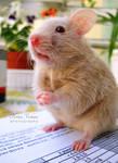 funny hamster 2