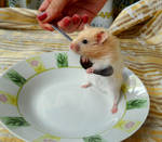 funny hamster 3