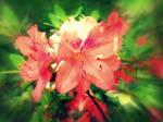 pure flower