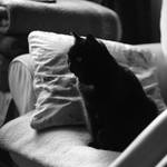 Le Cat