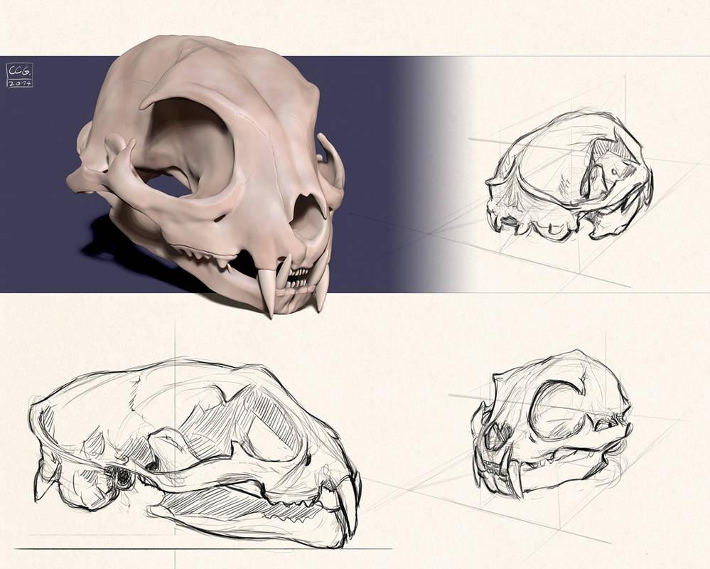 cat skull study by razputin93