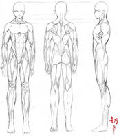 Study: Muscles M. by The-Nai