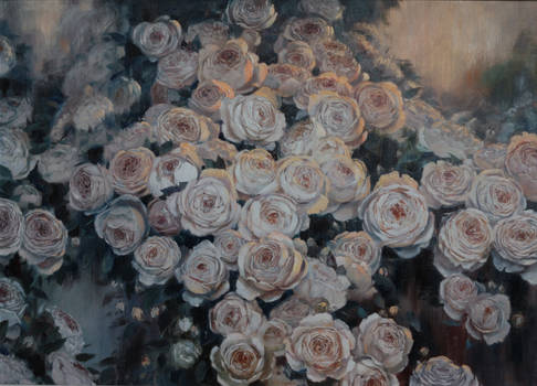 The roses for the saints