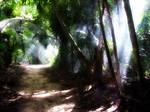 path through jungle
