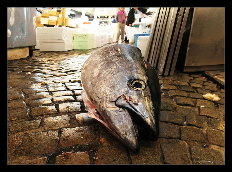 Dead Fish by alireza1