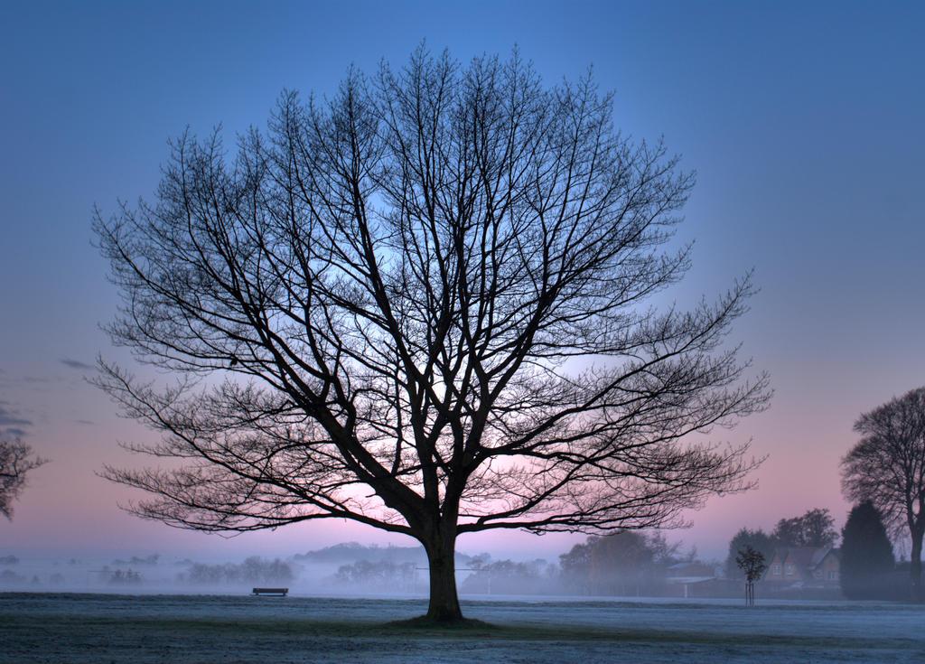 Tree by awropa