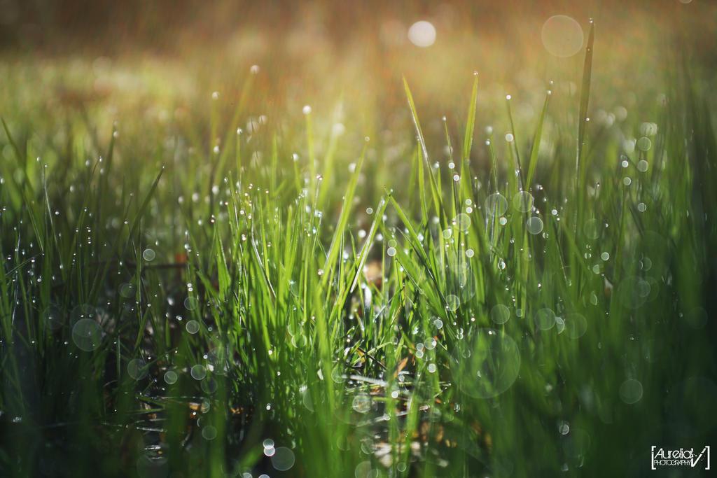 Dew by awropa