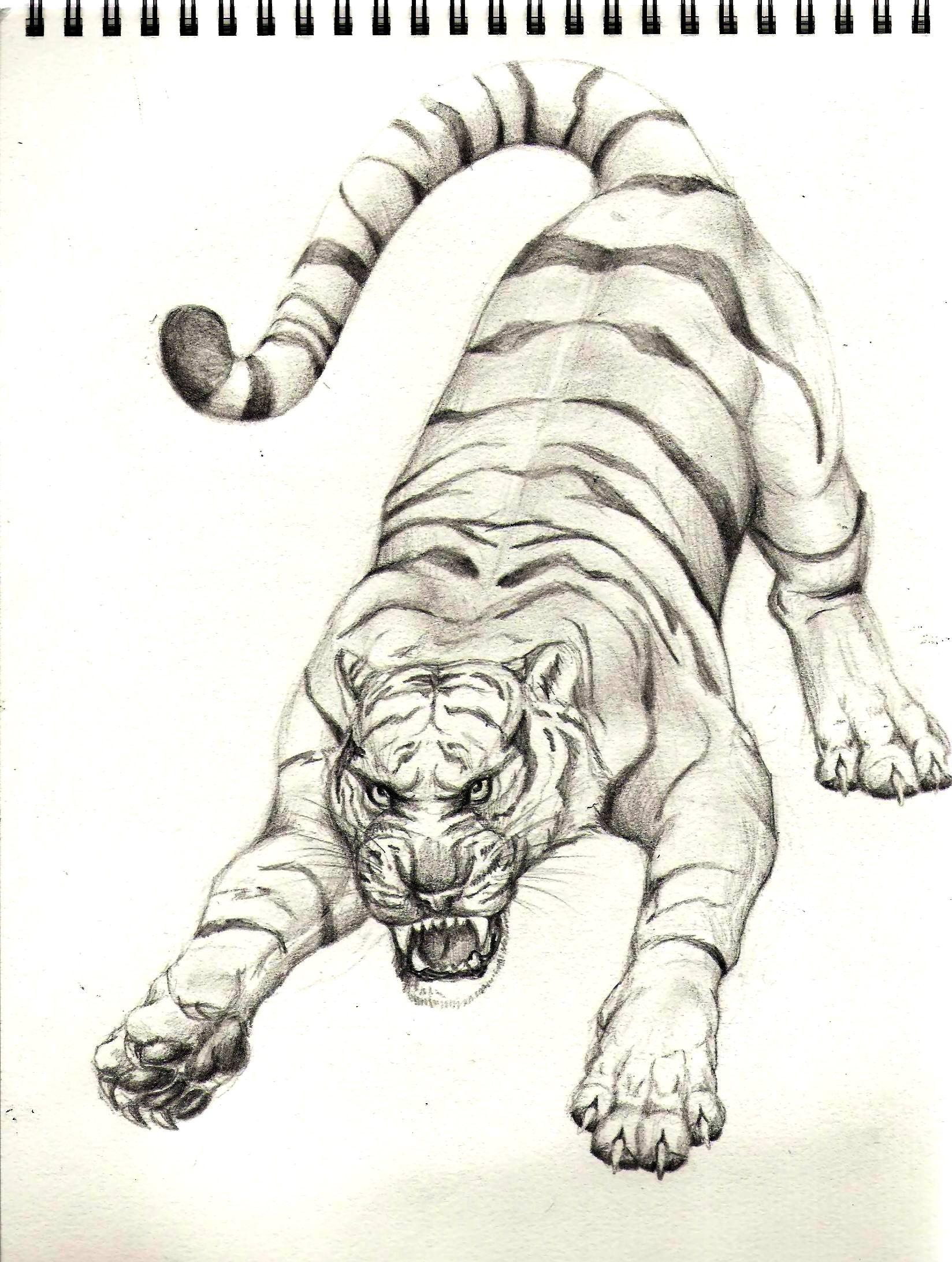 White Tiger Animal DrawingWhite Tiger Drawings