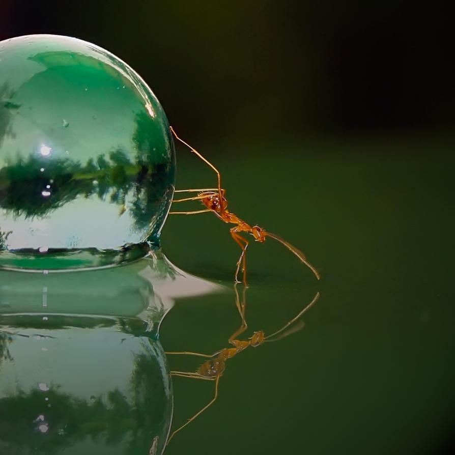 Les fourmis The_ant_by_teguhsn-d31lo9a