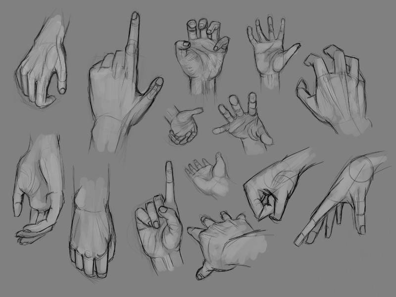 14 Hand studies by tierEight