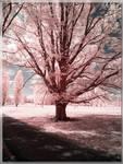 Stonehenge Area Tree