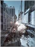 Pitt Street - IR