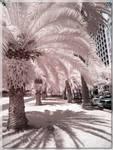 Botanical Gardens Area Trees