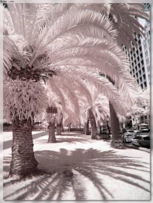 Botanical Gardens Area Trees by JohnK222