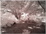 Botanical Gardens - Roots