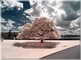 Botanical Gardens Tree by JohnK222