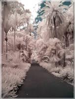 Botanical Garden Path by JohnK222