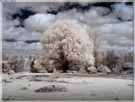 Sacred Tree 2 by JohnK222