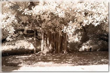 Botanic Gardens - Rooty Tree by JohnK222