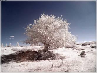 Just A Stonehenge Tree by JohnK222