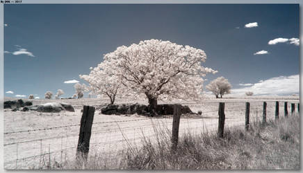 Tree Beyond The Fence by JohnK222