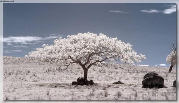 Field Tree by JohnK222