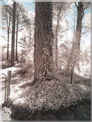 Burradoo Vine Tree by JohnK222