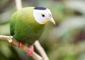 Un oiseau tropical by StoFF-1990