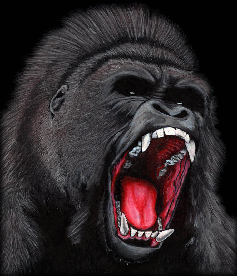 Angry Silverback Gorilla Face | www.pixshark.com - Images ...