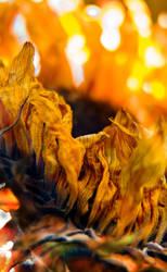 Flower On Fire II by etereal